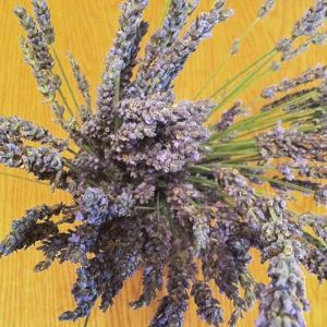 Lavendar from Trader Joe's - I couldn't smell it, but it sure was beautiful on our kitchen table!